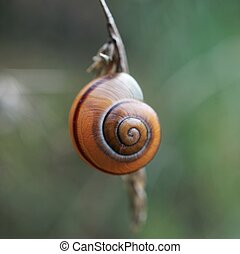 the snail on the plant