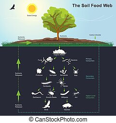 The Soil Food Web diagram. Illustration info graphic. - The...