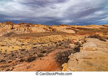 The Southwest Desert