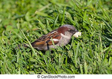 The sparrow eats bread