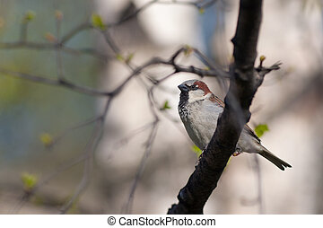 The sparrow sits on a tree