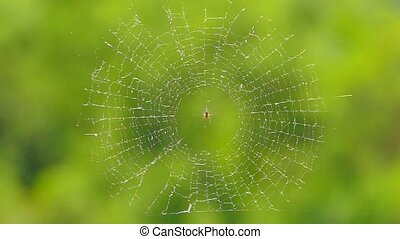 The spider sits in the center of the web. Slow motion.