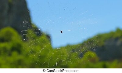 The spider sits on a transparent web. Slow motion. - The...