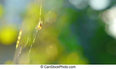 The spider sits on the web.