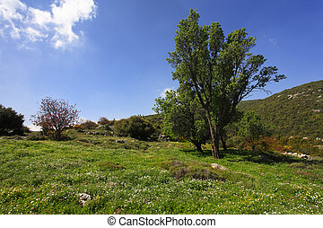 The spring grass - Slope of mountain Meron turning green by...