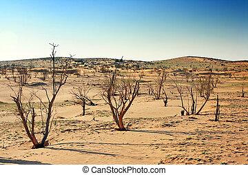 The spring in the desert