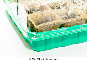 The sprouts germinate (seeds of tomato, pepper, eggplant), isolation