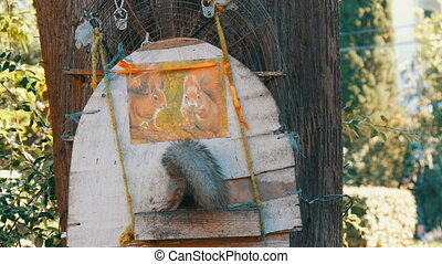 The squirrel comes into the house for portion of food with...