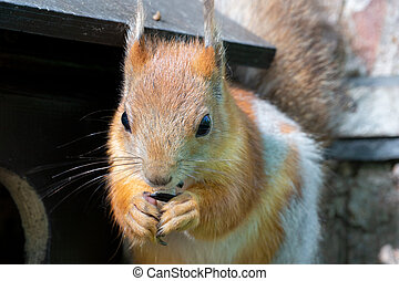 The squirrel eats a seed. An animal in the park.
