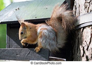 The squirrel gnaws a nut. An animal in the park.
