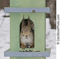 The squirrel in a small house