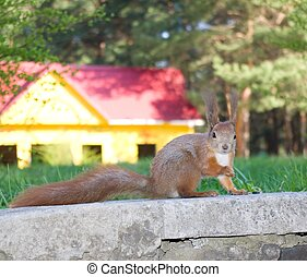 The squirrel in park.