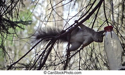 The squirrel in the wood eats from the feeding trough made...