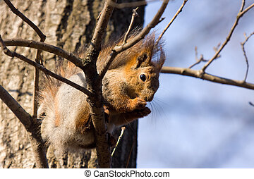 The squirrel on a tree branch