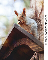 The squirrel on birdfeeder - the squirrel is sitting on a...