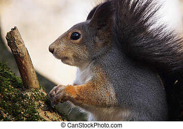 The squirrel sits on a tree branch.