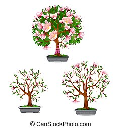 The stage of growth of blooming bonsai azalea isolated on a white background. Cartoon vector close-up illustration.