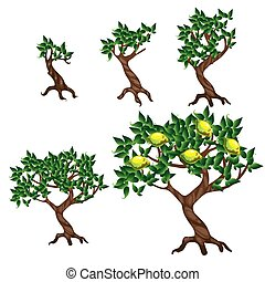 The stages of growing a lemon tree isolated on white background. Vector cartoon close-up illustration.