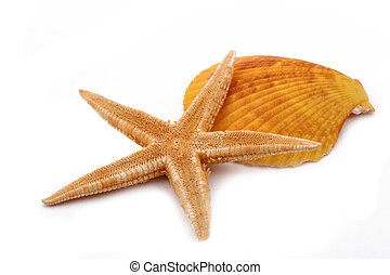 The Starfish with shell on the white background