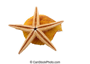 The Starfish with the shell on the white background