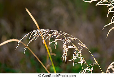 The stems of dried grass on a dark background.