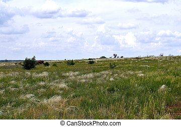 the steppe landscape