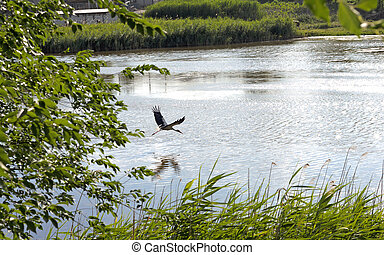 The stork over the water