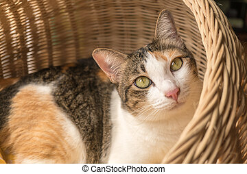 The striped cat is lying in the rattan basket.