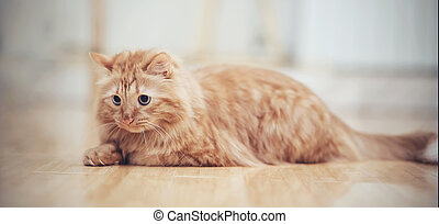 The striped red cat lies on a floor.