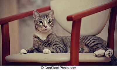 The striped young cat on a chair.