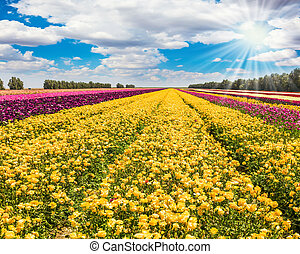 The stripes of yellow and red flowers