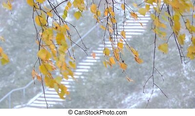 The strong snowfall in the forest. Branches and leaves sway in the wind