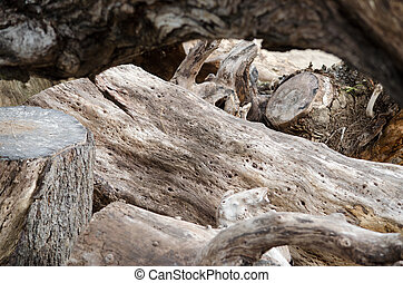 The stump of a tree wood