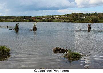 Stumps sticking out of lake
