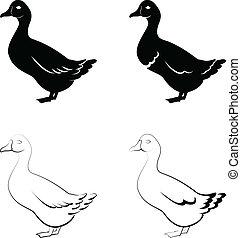 black ducks - the stylized black ducks on a white background...