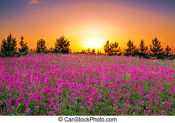 summer landscape with purple flowers on a meadow and sunset