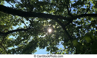 the sun appears through branches of trees
