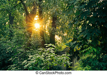 The sun at sunset among the tall lush green trees