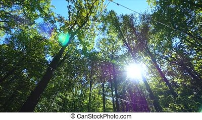 The sun beautifully illuminating the green treetops of tall beech trees in a forest clearing