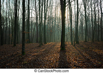 The sun behind a tree in a misty forest and fallen leaves, view in december day