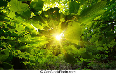 The sun centered and framed by beautiful green leaves
