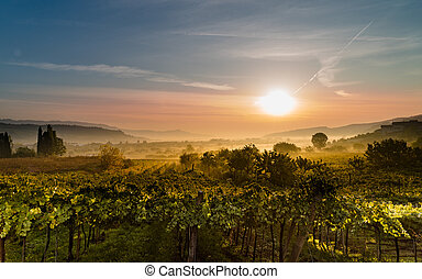 The sun rises in the vineyards and dissolves the mist.