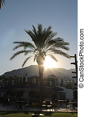 the sun sets behind the mountain with palm trees