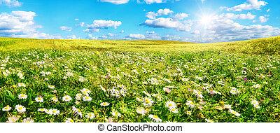 The sun shines on a wide meadow with flowers