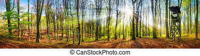 The sun shining in a forest at springtime, wide panorama