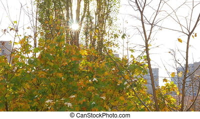 The sun shining through tree branches on a colorful autumn...