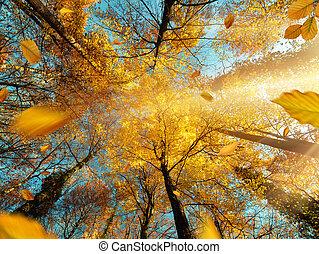 The sun shining through yellow leaves in autumn