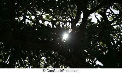 The sun through trees.