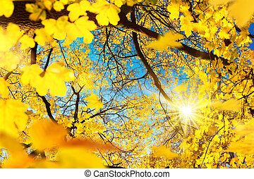 The sun whining through yellow leaves in autumn