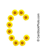 sunflower alphabet C on the white background